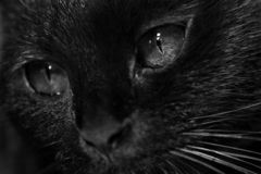Black cat with dark eyes stock photos
