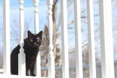 Black Cat on Deck. Black Cat Peeking through rails on white Deck Stock Images