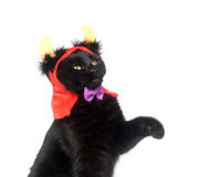 Black cat with devil horns Royalty Free Stock Photos