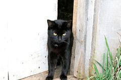 Black cat in the doorway Royalty Free Stock Photo