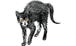Black cat drawing vector. Doodle Royalty Free Stock Photo