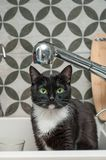 Black cat drinking tap water. Black cat drinking water from a tap royalty free stock photos