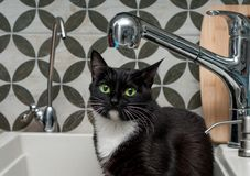 Black cat drinking tap water. Black cat drinking water from a tap stock photo