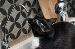 Black cat drinking tap water. Black cat drinking water from a tap stock photography