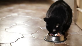 Black cat is eating at home. Royalty Free Stock Image