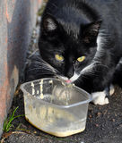 Black cat eating Royalty Free Stock Images