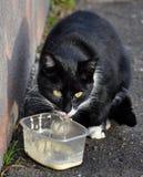 Black cat eating Stock Image