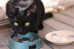 Black cat eating on the veranda Royalty Free Stock Image