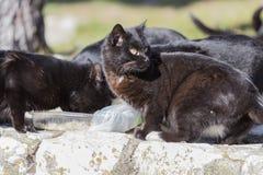 Black cat eating togheter. Cute black cat eating togheter Stock Images