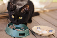 Black cat. Eating on the veranda Royalty Free Stock Images