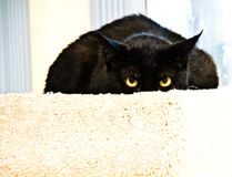 Black Cat / Expression Royalty Free Stock Photos