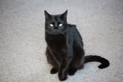 Black cat with expressive eyes. On ceramic gray floor background, with shadows stock photos