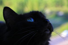 Black cat eye Royalty Free Stock Images