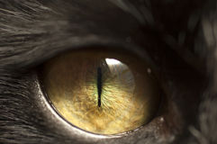 Black cat eye Stock Image