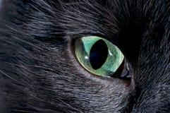 Black cat eye. Macro shooting Royalty Free Stock Images