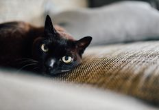Black, Cat, Eyes stock photography