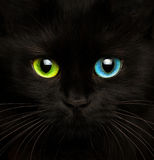 Black cat with eyes of different colors closeup. Cute muzzle of a black cat with eyes of different colors closeup royalty free stock image
