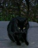 black cat eyes green Στοκ Φωτογραφία
