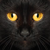 Black cat eyes macro. Animal background royalty free stock image
