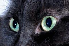 Black cat eyes. Macro shooting Stock Photos