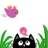 Black cat face head silhouette looking up to mother and baby bird. Green grass dew drop. Cute cartoon character. Kawaii animal. Pe Royalty Free Stock Photo