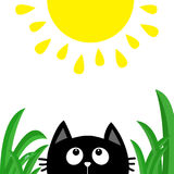 Black cat face head silhouette looking up to shining sun. Green grass dew drop. Cute cartoon character. Kawaii animal. Baby card. Stock Photo