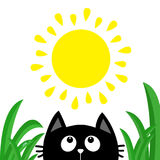 Black cat face head silhouette looking up to sun shining. Green grass dew drop. Cute cartoon character. Kawaii animal. Baby card. Royalty Free Stock Photo