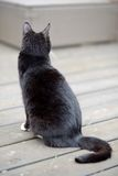 Black cat facing away looking into distance Stock Image