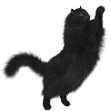 Black Cat. A black cat is a feline with black coloring and may not be any specific breed Stock Images