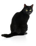 Black cat. Black female cat sitting on white background Stock Photos