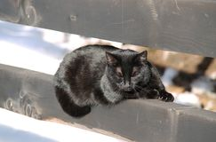 Black cat on the fence. Cute fluffy black cat lying on the wooden fence and basking in the sun in winter stock image