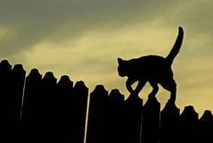 Silhouette. Black cat on a fence, at sunset. Silhouette of a black cat on the fence, at sunset Stock Photography