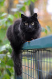 Black cat on a fence. Black cat sitting on a fence Stock Image