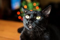 Black cat with festive lights behind. Curious black cat with yellow eyes stock photography