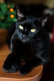 Black cat with festive lights behind. Curious black cat with yellow eyes royalty free stock images