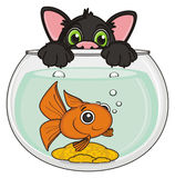 Black cat with fish. Muzzle of black cat peek up from the aquarium with goldfish Stock Photos