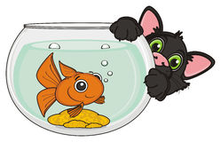 Black cat with fish. Snout of black stick out from the aquarium with goldfish Stock Images