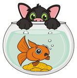Black cat with fish. Snout of black stick out from the aquarium with scary goldfish Stock Photos
