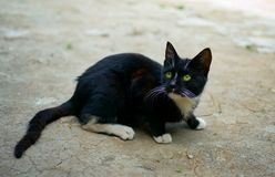 Black cat on the floor Royalty Free Stock Images