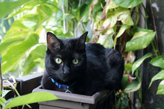 Black cat in flower pot Royalty Free Stock Photography