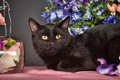 Black cat and flowers Stock Photos