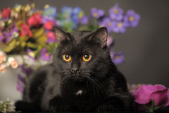 Black cat with flowers Stock Image