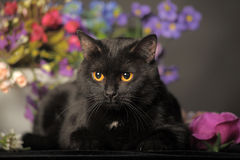 Black cat with flowers Royalty Free Stock Photography