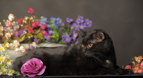 Black cat with flowers Stock Photo