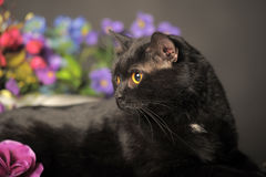 Black cat with flowers Royalty Free Stock Photos