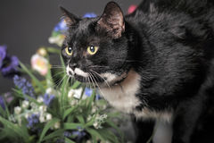 Black cat with  flowers Stock Images