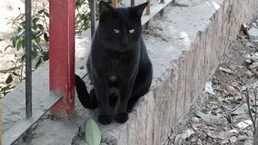 Black Cat. Found an adorable cat and got a nice click stock images