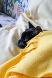 Black Cat freezes under yellow blanket Stock Photo