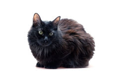 Black cat in front Stock Photo