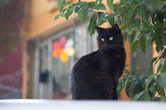 Black cat in front of the building Royalty Free Stock Image